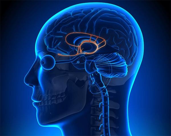 سه بخش مغز